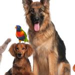 Aansprakelijkheidsverzekering voor huisdieren