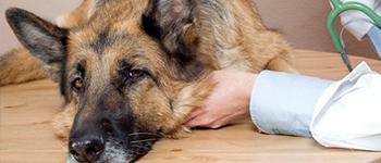 Verzekering kosten dierenarts