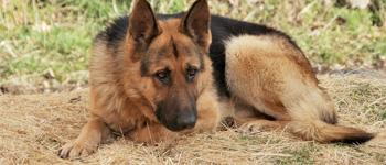 c9a2ea158dc26c De kosten voor het chippen van een hond kunnen flink variëren. Iedere  dierenartsenpraktijk rekent hiervoor een eigen prijs. Over het algemeen kan  je een ...