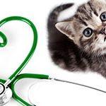 Dierenverzekering berekenen