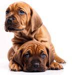 De beste hondenverzekering