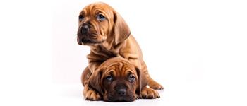 beste-hondenverzekering