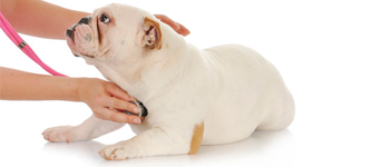 huisdieren-epilepsie