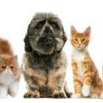 Een verzekering voor meerdere dieren