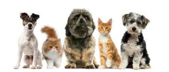 Je huisdier verzekeren