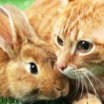 Dierenverzekering voor een knaagdier