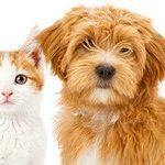 Is een dierenverzekering rendabel?