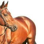 Dierenverzekering voor een paard