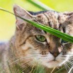 Tips: kat voor het eerst naar buiten