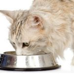 Blaasgruis bij hond of kat