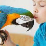 Dierenverzekering voor papegaaien