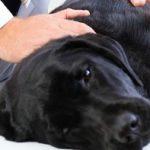 Artrose bij honden; is dit te verzekeren?