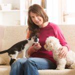 Vrienden voor het leven: een hond en kat samen in huis