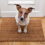 Je hond leren alleen thuis zijn