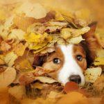 Eikels giftig voor je hond