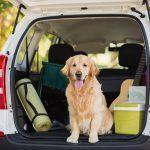 Dierenverzekering voor op reis