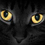 Je huisdier zichtbaar in het donker