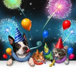Vuurwerkangst huisdieren: wat kan je eraan doen?