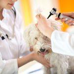 Huisdierverzekering: kosten dierenarts worden vergoed