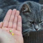 Ontwormen kat: wat moet je doen