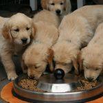 Voedselallergie bij je hond