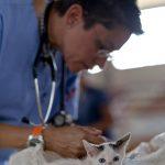Kijk uit met de dodelijke kattenziekte FPV!