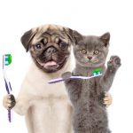 Gebitsverzorging van je huisdier