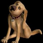Vlooien bij je hond