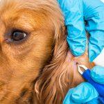 Wat te doen tegen teken bij honden?