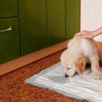 Urine opvangen bij een hond. Hoe doe je dat?