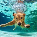 Hond ziek na zwemmen. Wat nu?