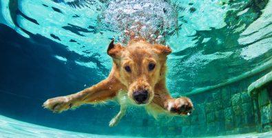 hond ziek na zwemmen