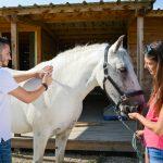 Paardenverzekering: paard verzekeren of niet?