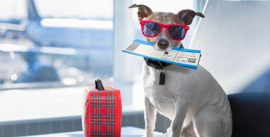 reizen met je hond