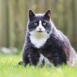 Overgewicht kat. Voorkomen is beter dan genezen