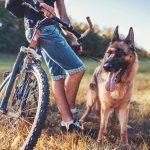 Fietsen met de hond