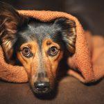 Angstige hond kalmeren