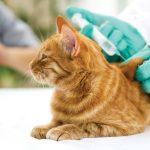 Suikerziekte kat. Wat kun je er aan doen?