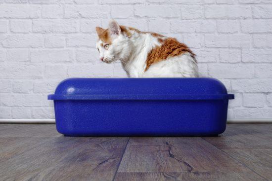 blaasgruis kat