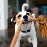 Wat is leuk hondenspeelgoed?