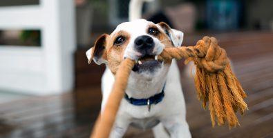 leuk hondenspeelgoed