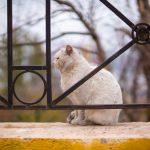 Wanneer kan mijn kat naar buiten laten?
