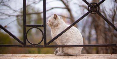 kat naar buiten laten