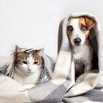 Waarom moet ik mijn huisdierenverzekering vergelijken?