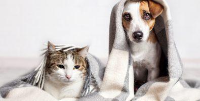 huisdierenverzekering vergelijken zieke hond en kat