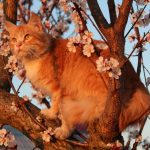 Kat in boom. Wat te doen?