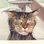 Kat in bad doen. Hoe pak ik dit aan?