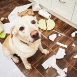 Weinig risico met de juiste huisdierverzekering