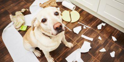 huisdierverzekering